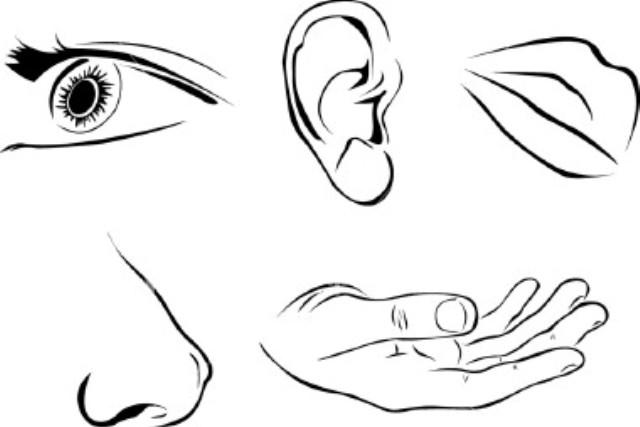 Alzheimer's and the senses